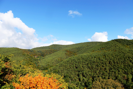 Forest with autumnal coloring, panoramic view Stock Photo