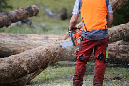 Worker sawing tree trunks with chainsaw Stock Photo