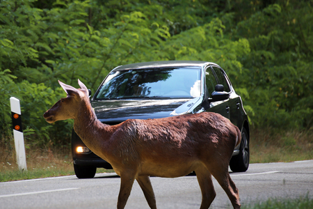 Be aware of deer crossing!