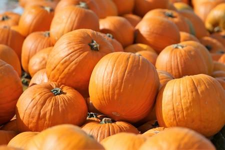 Pumpkins, pumpkin patch