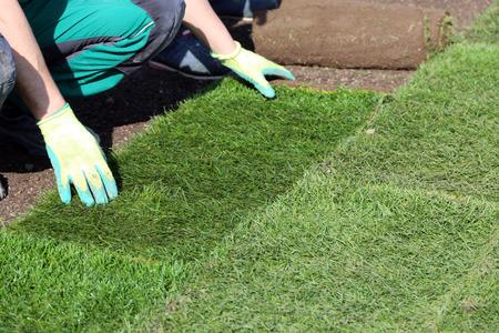 Gärtner, der gerollten Rasen legt