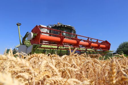 Agricultural cereal harvest with combine harvester