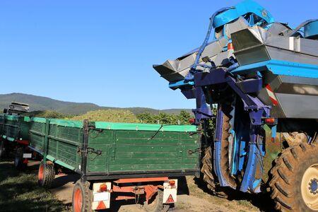 Agricultural grape harvest