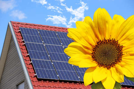 Symbolic picture: solar roof (photovoltaic system) with sunflower in the foreground