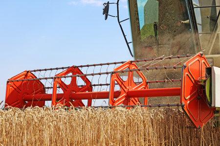 Agricultural cereal harvest (Mutterstadt, Rhineland-Palatinate, Germany, July 20, 2020)