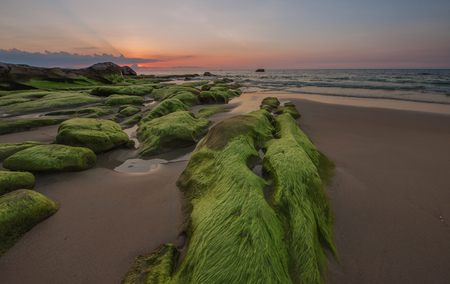 relaxion: super green moss at Kudat Sabah Borneo Stock Photo