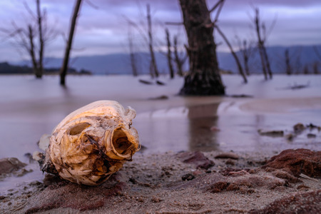 Dusk photograph of a dead fish lying by the lakeside