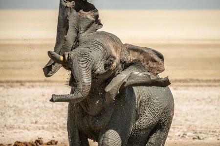 An elephant taking a mudbath in Etosha, Namibia