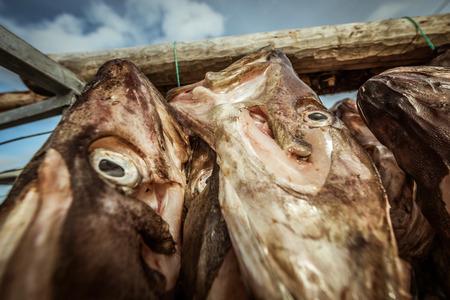 Stockfisch hängen bis in Sommaroy, Norwegen trocknen