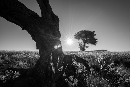 The sun setting between two trees in the Sossusvlei, Namibia Standard-Bild
