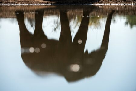 An abstract close up photograph of a large elephant bull's reflection of the water surface of a water hole in the Madikwe Game Reserve, South Africa.