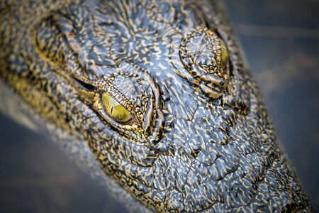 A close up detailed portrait of a crocodile's eyes, taken from above, on the Chobe River in Botswana.