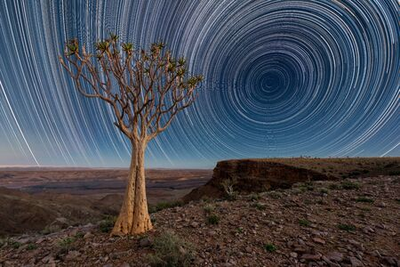 A night sky landscape taken on top of the arid and stark Fish River Canyon, Namibia, with an ancient Quiver Tree in the foreground, and circular star trails against a deep blue sky on the horizon.