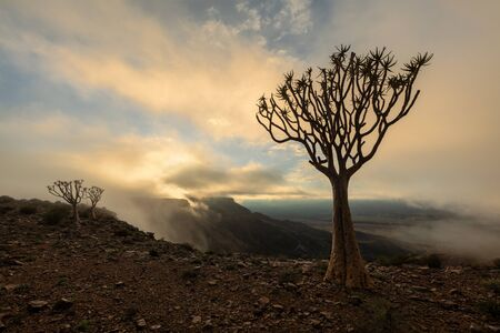A moody landscape taken on top of the arid and stark Fish River Canyon, Namibia, with an ancient Quiver Tree silhouetted in the foreground, and the golden sun breaking through the clouds at sunrise. Standard-Bild
