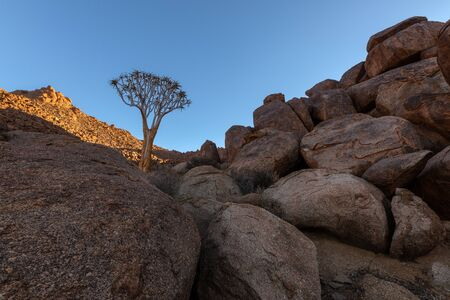 A beautiful arid mountain landscape at sunset, with fascinating rock formations in the foreground and a beautiful Quiver Tree in the background, taken in the Richtersveld National Park, South Africa.