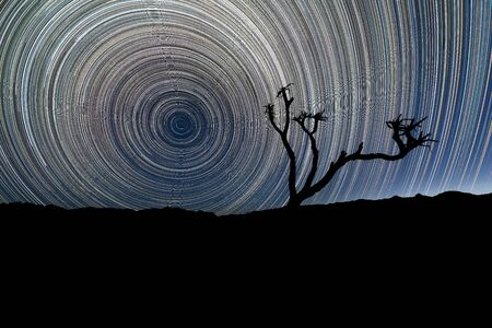 A beautiful night sky landscape with circular star trails, with a Quiver Tree silhouetted in the foreground and mountains on the horizon, in the Richtersveld National Park, South Africa.