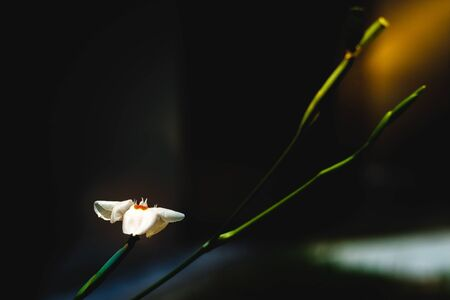 The light in the solitude of a flower