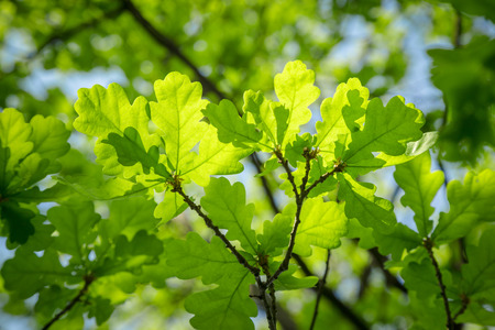 Branch of young leaves and green sky
