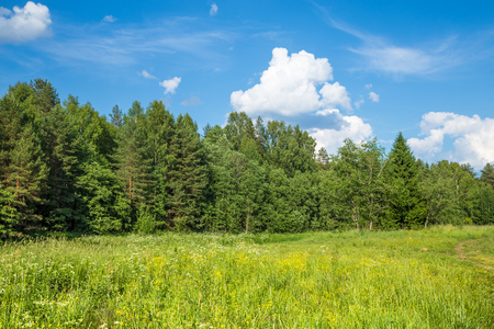 Summer landscape in sunny day. Beautiful white clouds and a forest.