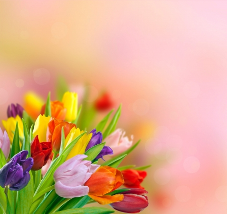 Spring tulips Stock Photo - 13639056
