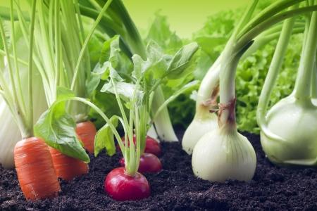 Groenten in de tuin Stockfoto