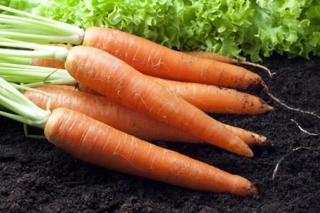 carrots: zanahorias org�nicas Foto de archivo