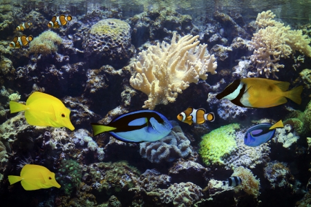 Aquarium Exotic and Tropical photo