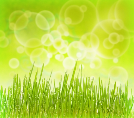 Green bokeh abstract background with grass photo