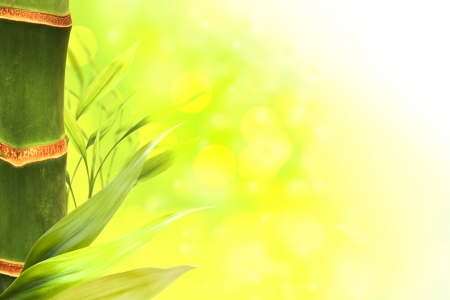 Abstract of bamboo forest Stock Photo - 13711543