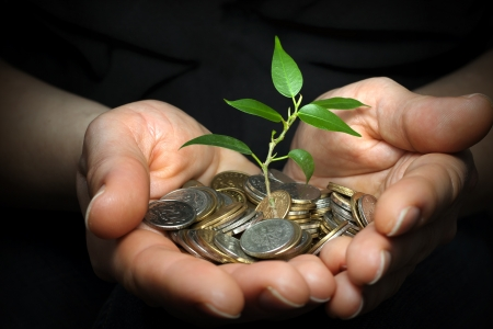 pile of leaves: money in hands investment concept