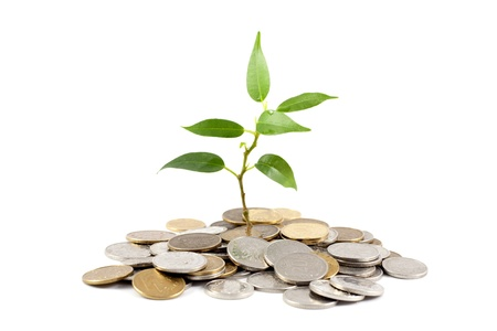 retiring: Investment save money plant and coins
