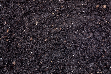 black seeds: Soil texture