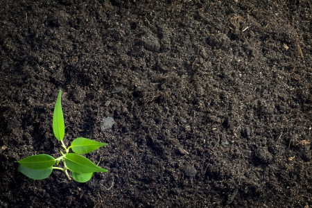 Soil and plant background photo