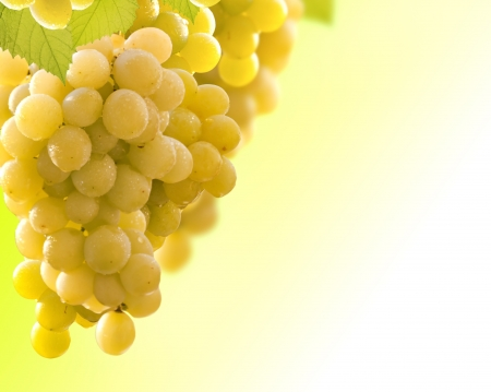 wine grapes background Stock Photo - 13738052