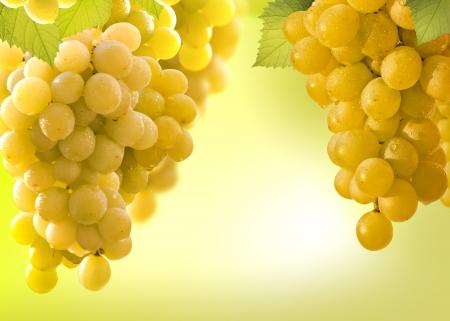 wine grapes border photo