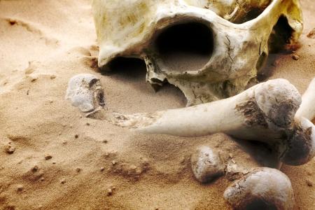 huesos: cr�neo y huesos en el desierto Foto de archivo