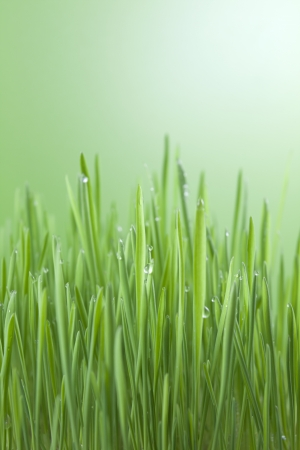 green grass with water drops abstract background photo
