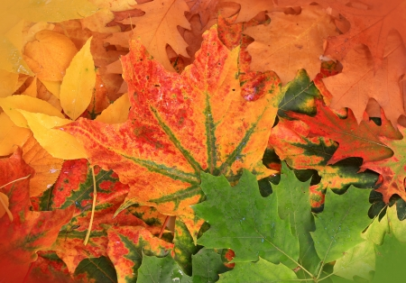 autumn leaves colorful background photo