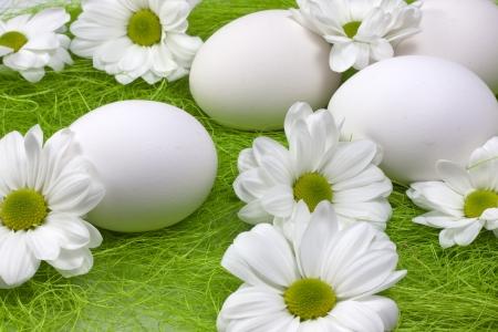 White organic eggs in grass photo