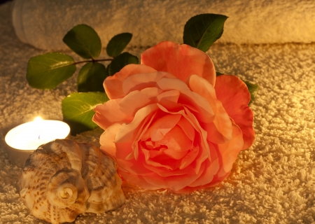 memorial candle:  rose candles and shell in night spa abstract Stock Photo