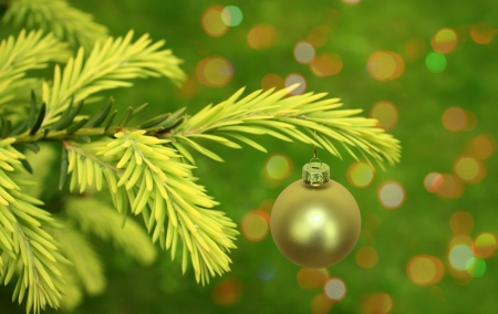 Christmas branch of green tree with bauble photo