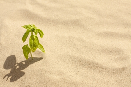 adverso: planta verde crece en soledad arena y el concepto de la fe