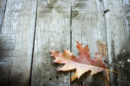 Autumn leaf on wooden boards background photo