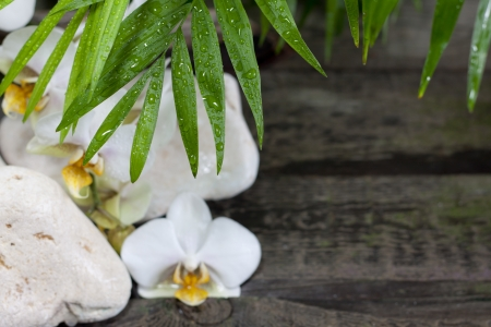 Palm and orchid on wooden boards spa background  photo