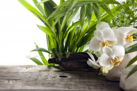 Orchideeën op stenen en houten planken spa concept achtergrond Stockfoto