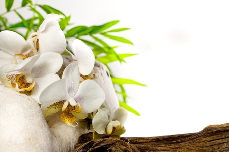 Spa concept with orchid and stones on white background