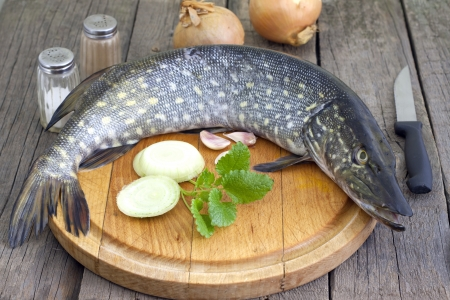 Pike raw fish preparation to baking in the kitchen photo