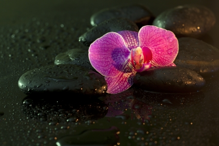 Orchid and stones in night spa concept still life photo