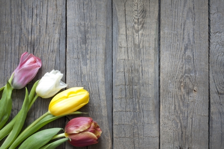 Tulips on vintage wooden planks background concept photo
