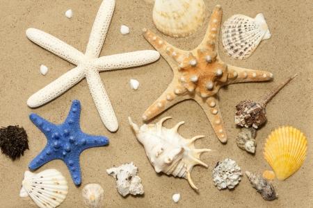 estrella de mar: Conchas y estrellas de mar en la playa de arena de fondo abstracto Foto de archivo